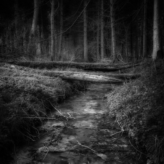 """Woodland Stream in black and white"" stock image"