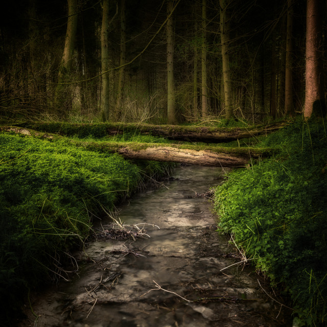 """Woodland Stream in colour"" stock image"