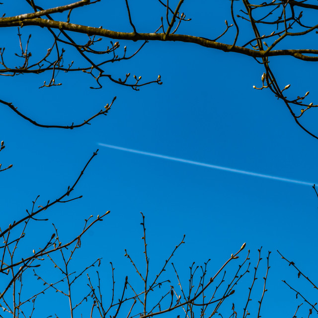 """""""Tree and jet vapour trail"""" stock image"""