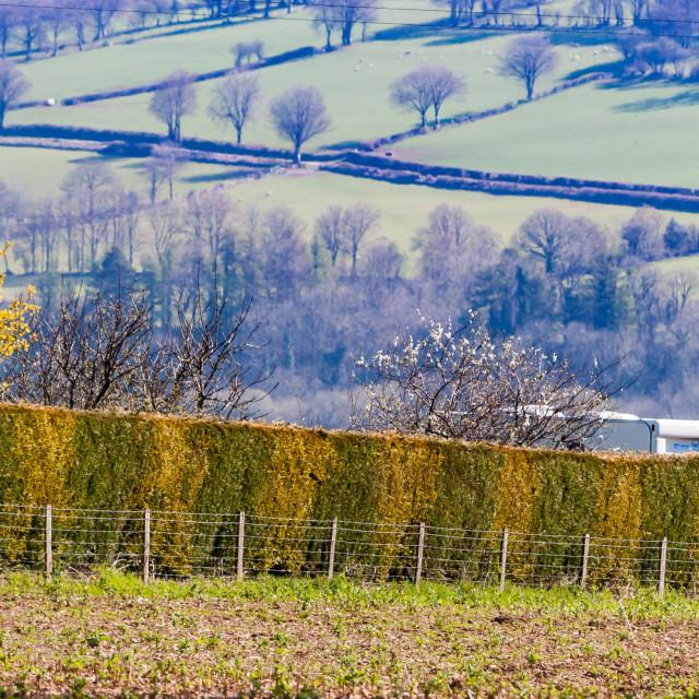 """""""Hedge in Welsh Landscape"""" stock image"""