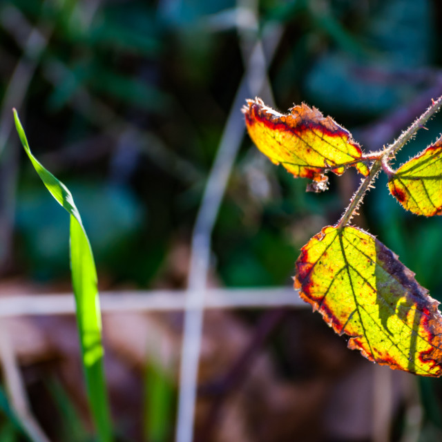 """""""Leaves and grass, backlit"""" stock image"""