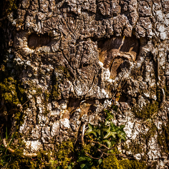 """""""Face in tree"""" stock image"""