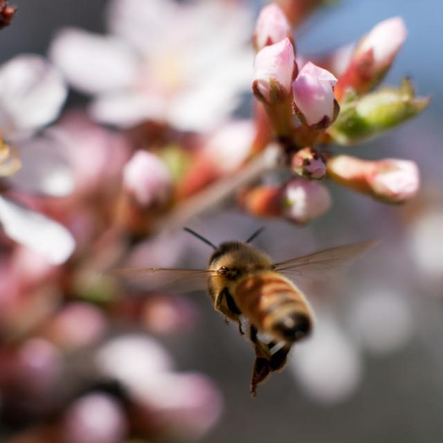 """Buzzin' Bee"" stock image"