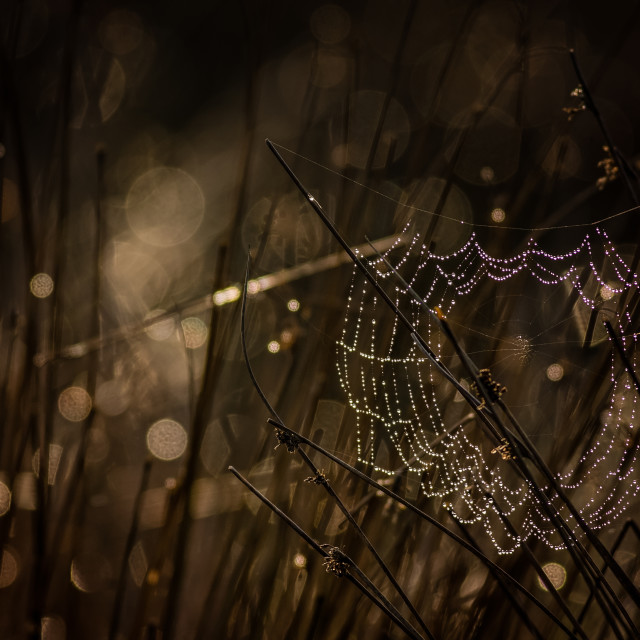 """""""Droplets of light"""" stock image"""