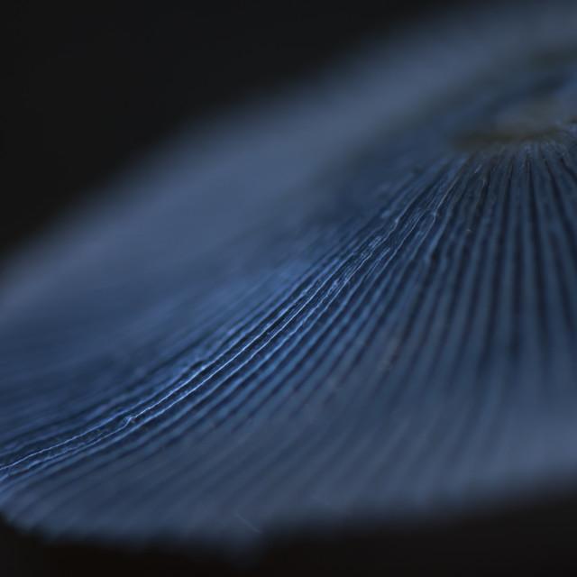 """Macro Mushroom Photo"" stock image"