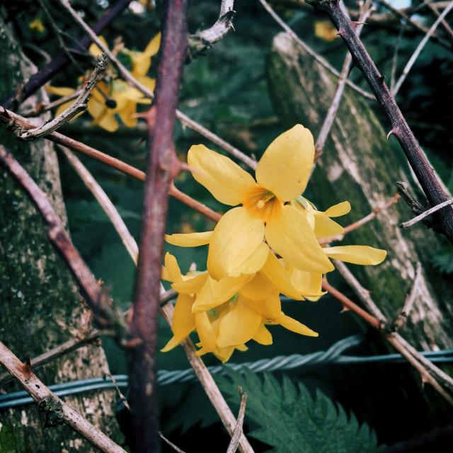 """Flower amongst the thorns"" stock image"
