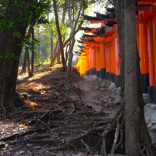 """Torii gates in Fushimi Inari Shrine, Kyoto, Japan"" stock image"