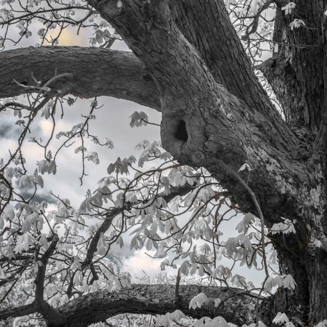 """The Tree"" stock image"