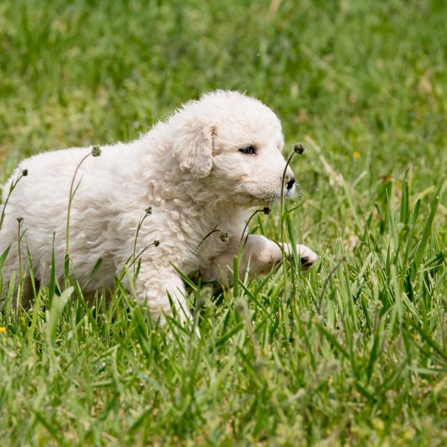 """Puppy"" stock image"