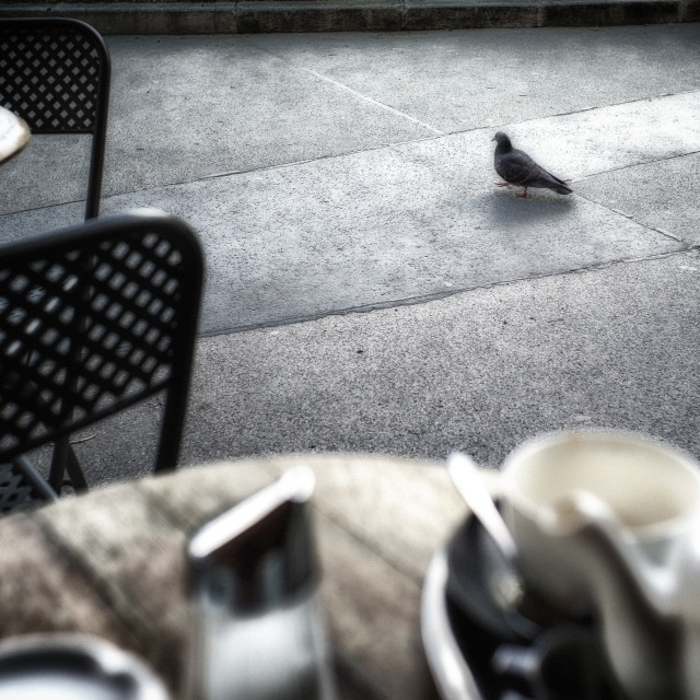 """Tea with a pigeon"" stock image"
