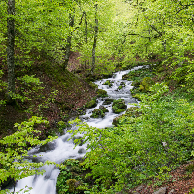 """Mountain Stream"" stock image"