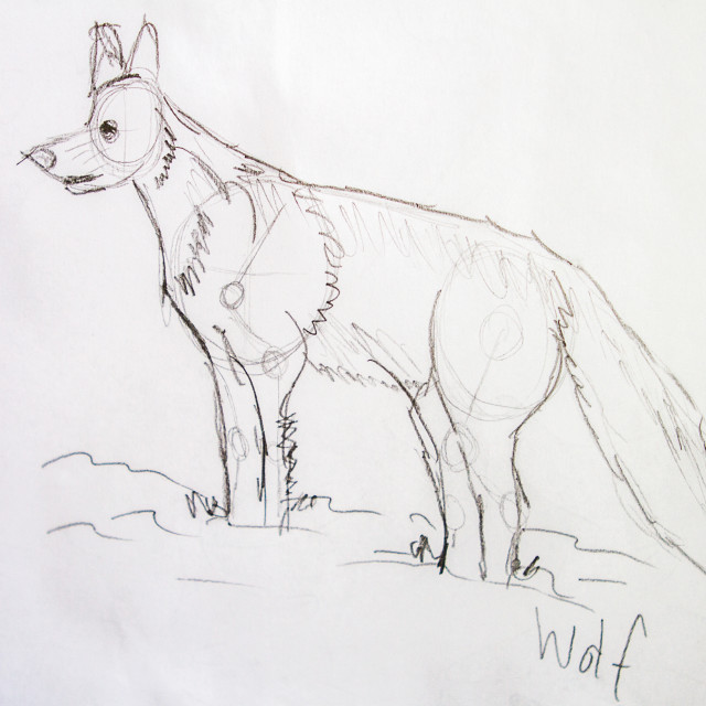 """Wolf"" stock image"