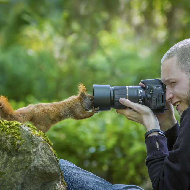 """The curious Squirrel"" stock image"