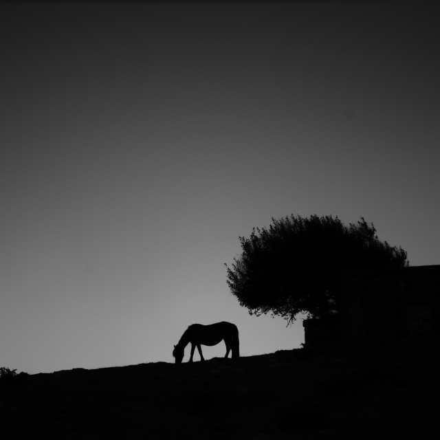 """horse silhouette"" stock image"