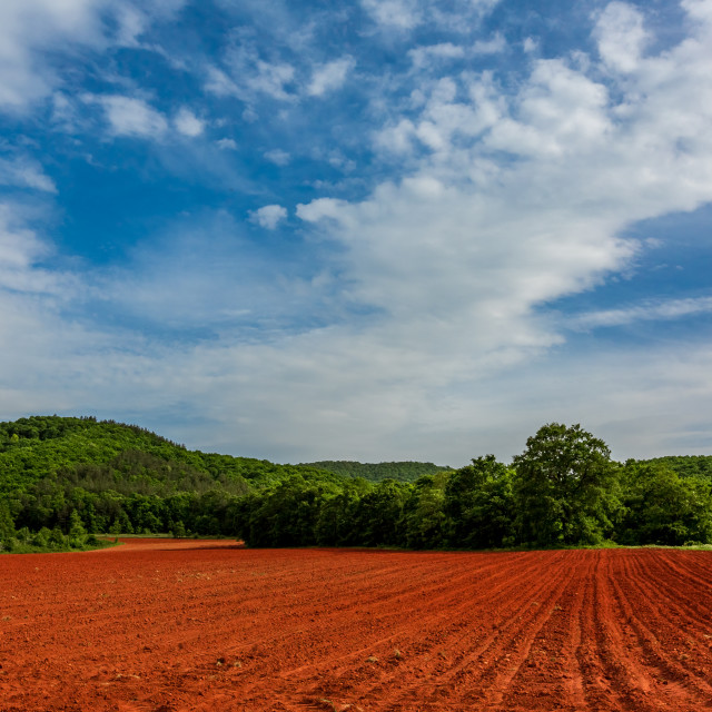 """""""Spring colors of a Bulgarian field"""" stock image"""