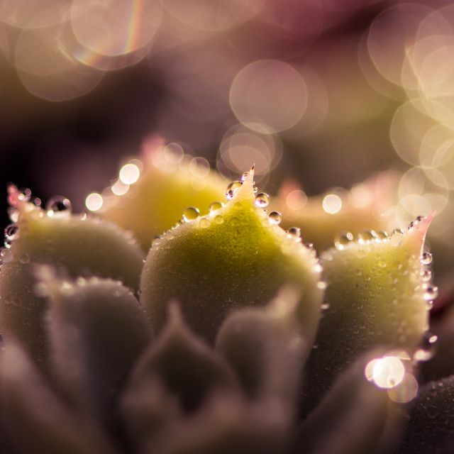 """Morning dew drops"" stock image"