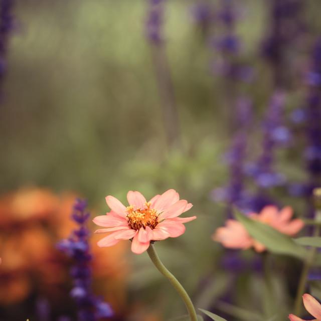"""In the garden"" stock image"