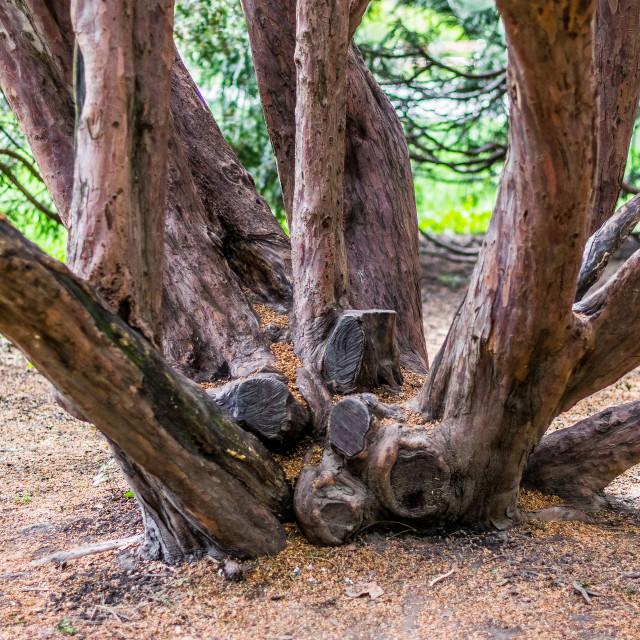"""""""Tree family"""" stock image"""