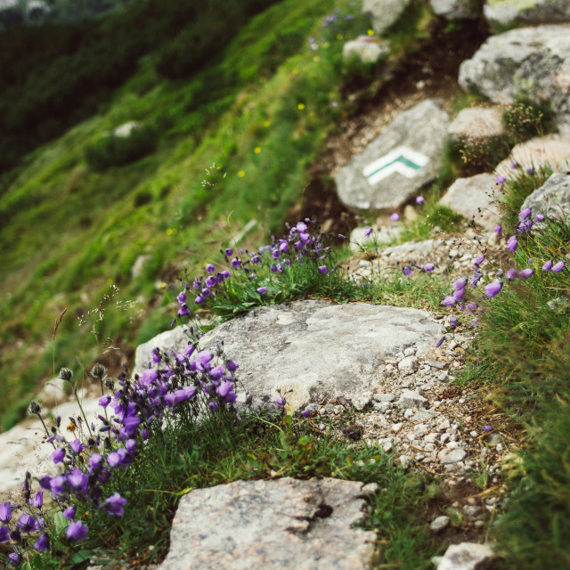 """Mountain Flora"" stock image"