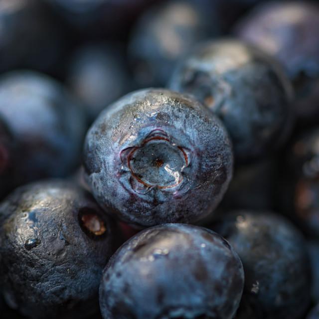 """Black Berries"" stock image"
