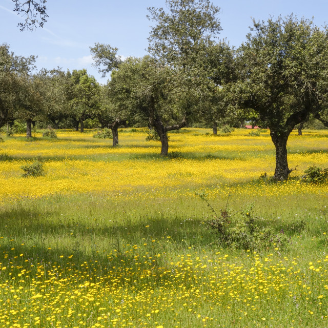 """Meadow in spring, Monfragüe National Park"" stock image"
