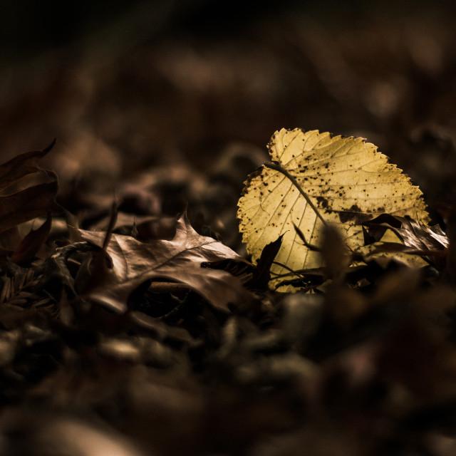 """Single leaf"" stock image"