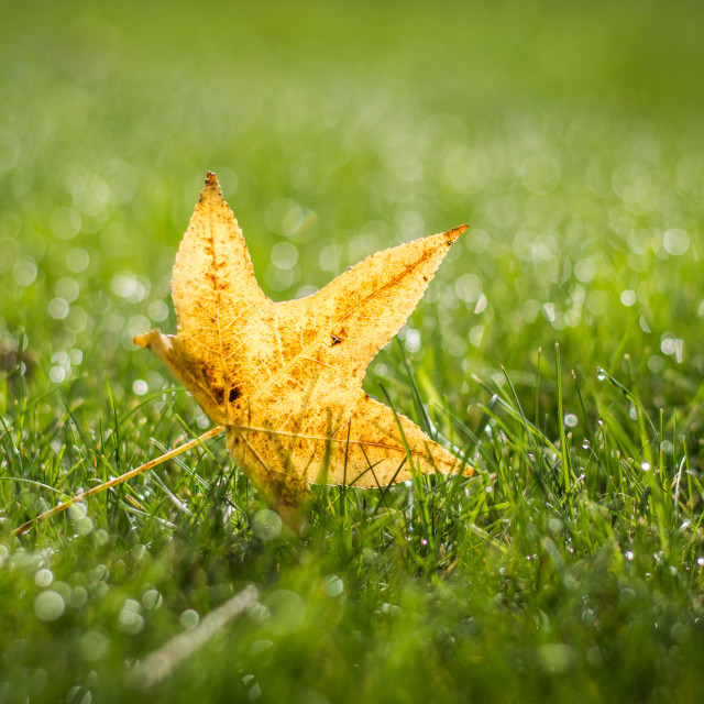 """Yellow leaf"" stock image"