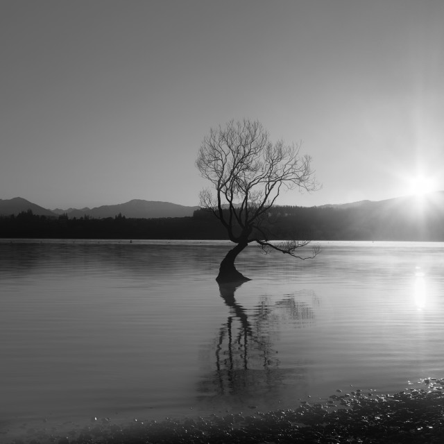 """Lonely Tree at Lake Wanaka"" stock image"