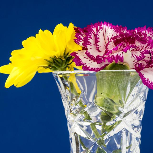 """""""Yellow Chrysanthemum - Pink Carnation"""" stock image"""