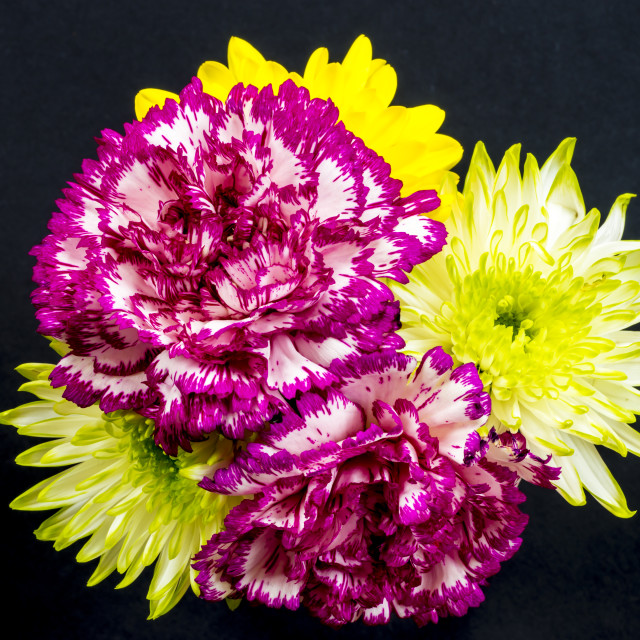 """Chrysanthemums and Carnations."" stock image"