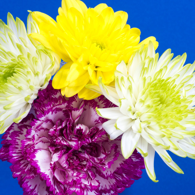"""Carnation and Chrysanthemums"" stock image"
