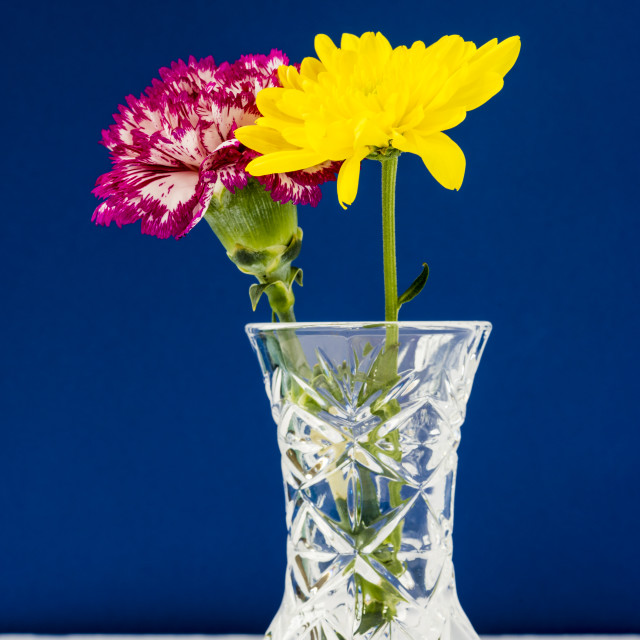 """Chrysanthemums and Carnation in a lead crysal vase on a blue bac"" stock image"