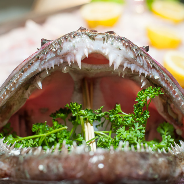 """Monkfish mouth scary closeup with teeth prepared in restaurant"" stock image"