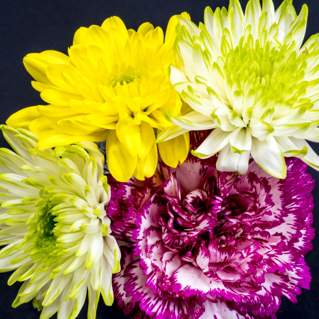 """Carnation and Chrysanthemums - aerial view on black."" stock image"