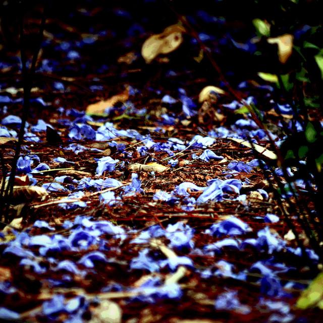 """Blue beauty"" stock image"