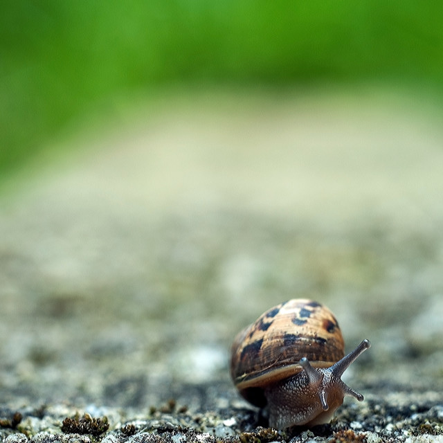 """Snail on the garden wall"" stock image"