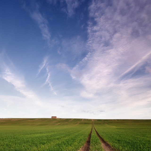 """Tracks in the field"" stock image"