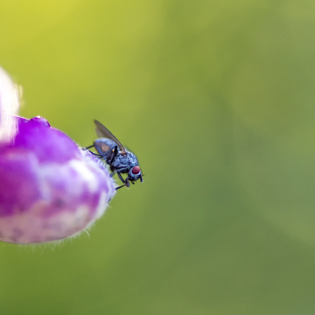 """Resting Fly"" stock image"