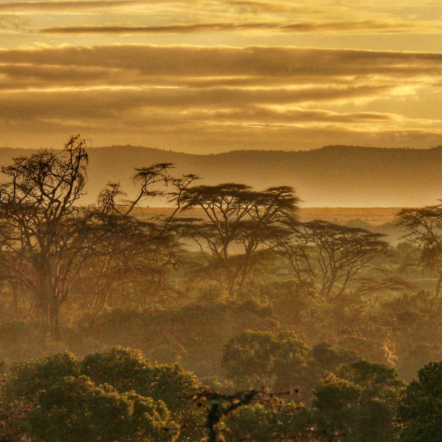 """""""An African Landscape"""" stock image"""
