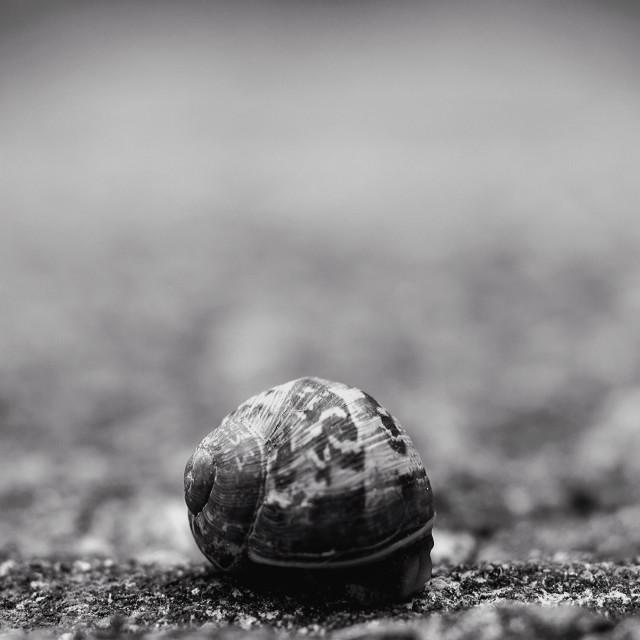 """Hiding snail"" stock image"