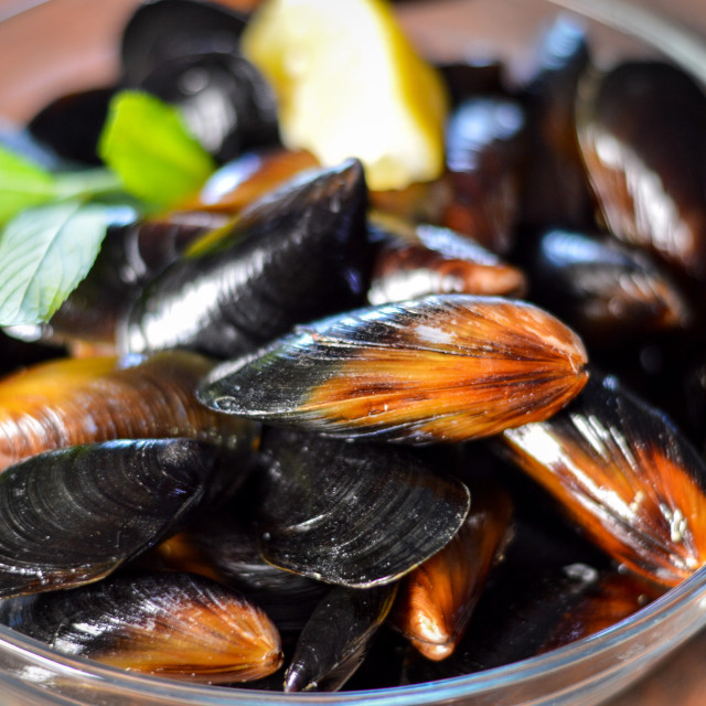 """Photo of fresh mussels, lemon and fresh herbs"" stock image"