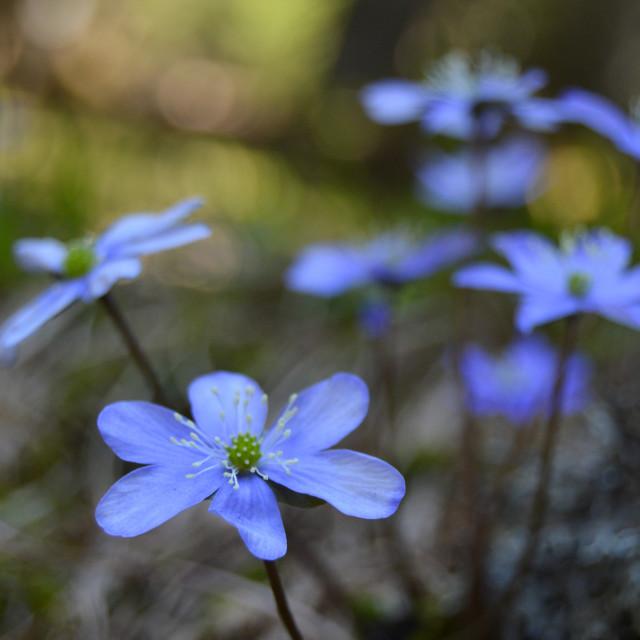 """Alpine Spring"" stock image"