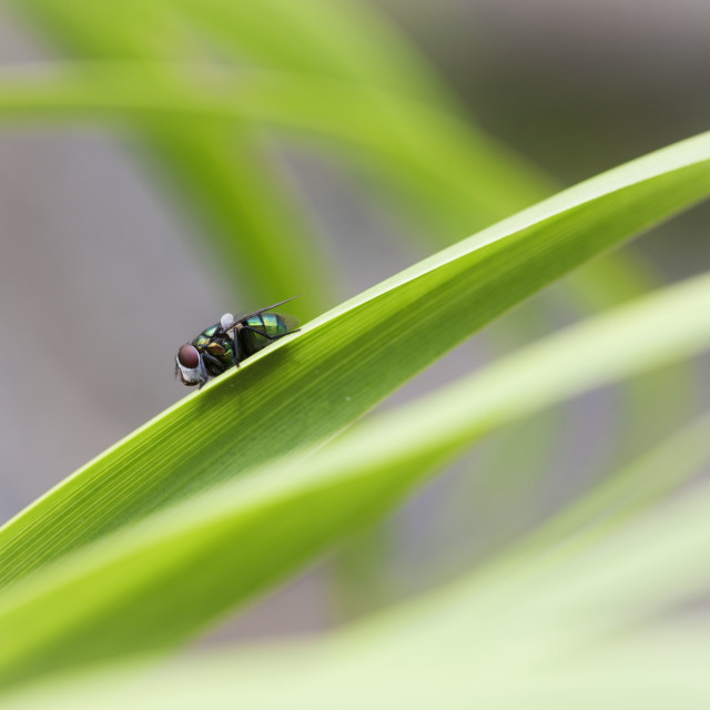 """""""Green Fly"""" stock image"""