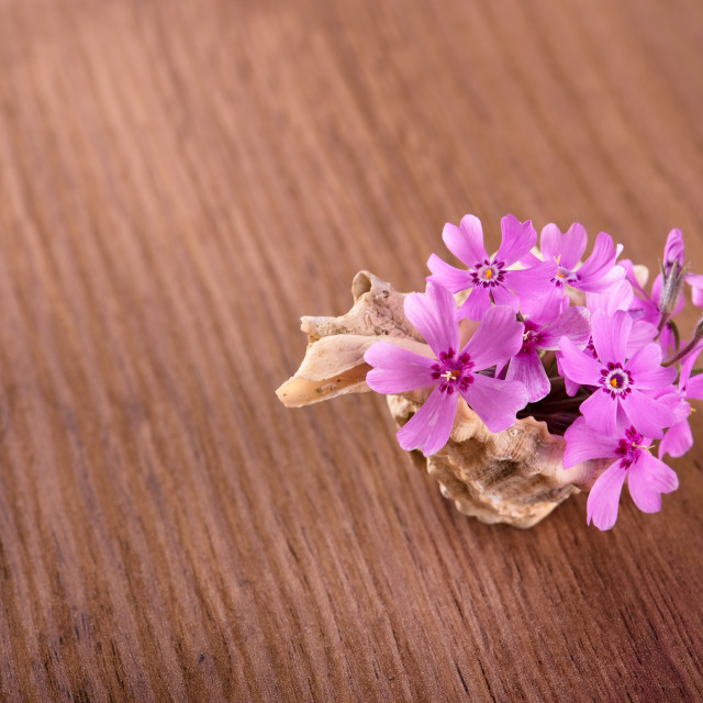 """Several pink carnations placed in seashell on wooden board"" stock image"