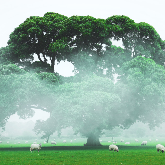 """Tree in mist"" stock image"