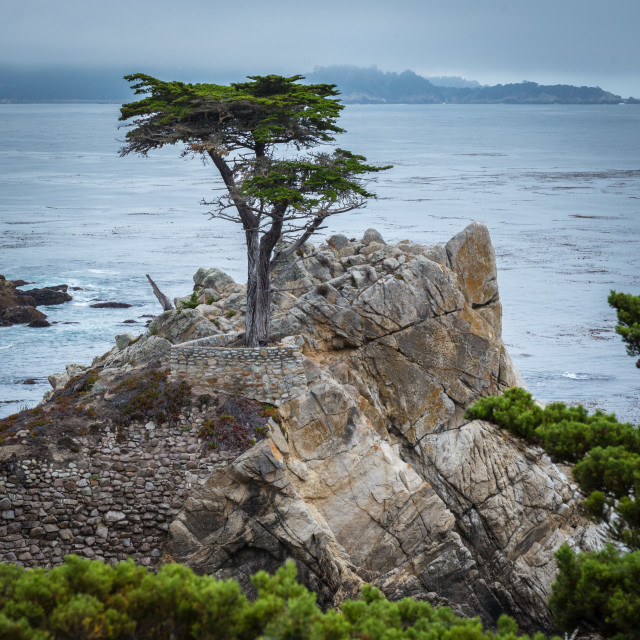 """Lone Cyprus Tree, 17- Mile Drive, Pebble Beach, CA"" stock image"