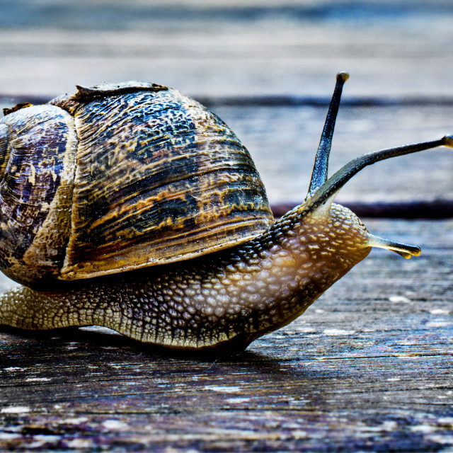 """Snail's Pace"" stock image"