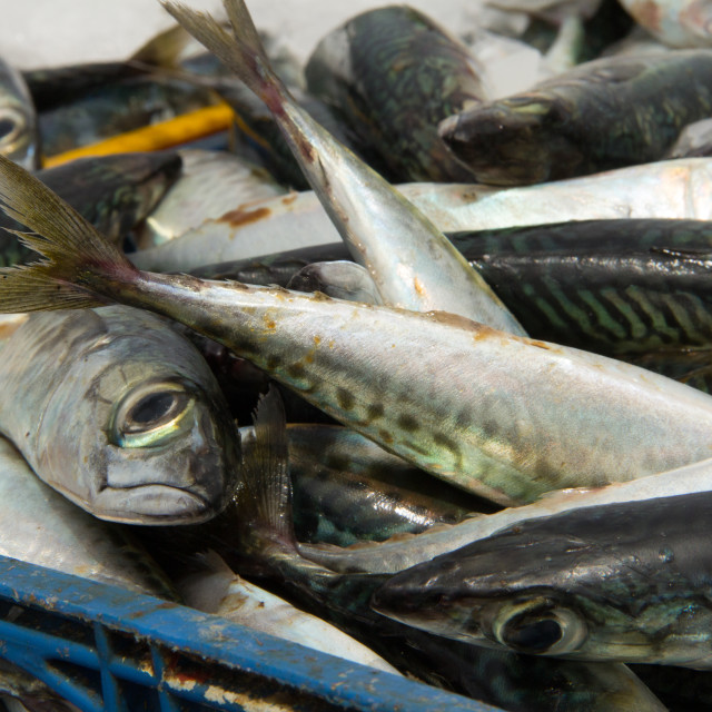 """Sardines, Port of Essaouira, Morocco"" stock image"