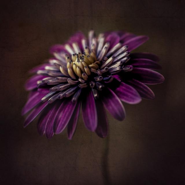 """A little bit of purple"" stock image"
