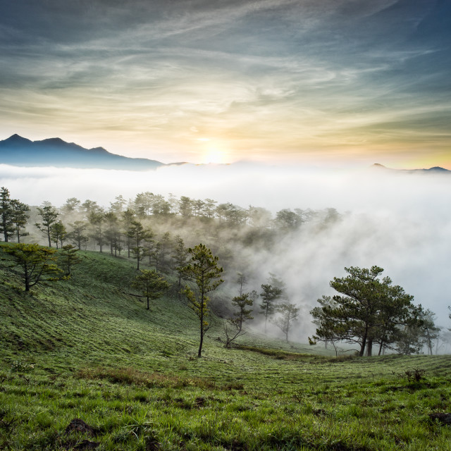 """Sunrise on pine hill"" stock image"
